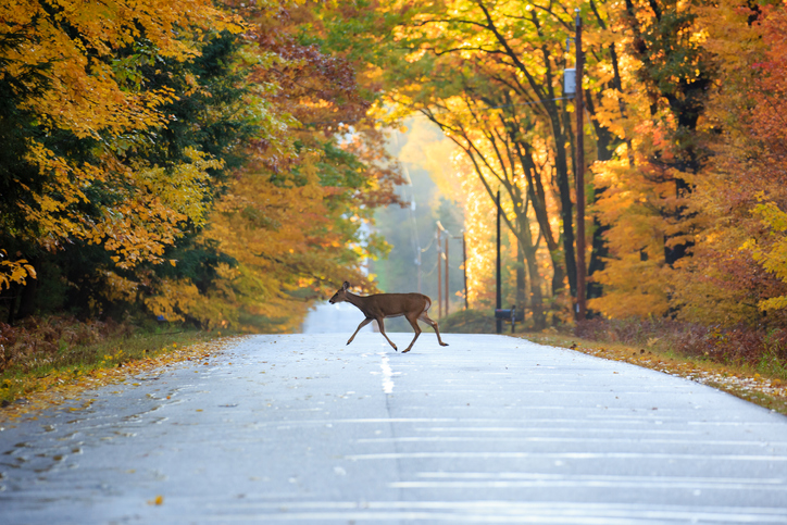 Accidents with Deer: How to Prevent Them, and What to Do When it Happens
